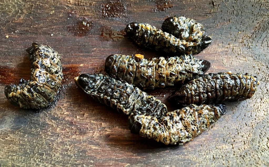 where are you, Mopani worms?!
